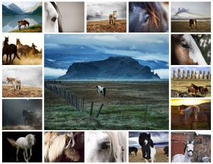 Collage with photos of horses