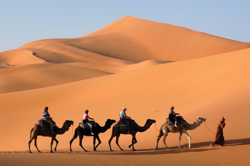 camelcade in a desert