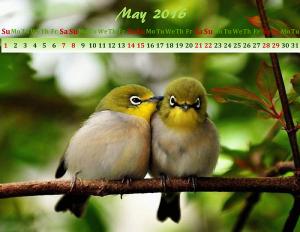 May calendar design